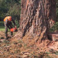 4 Amazing Benefits of Tree Surgery
