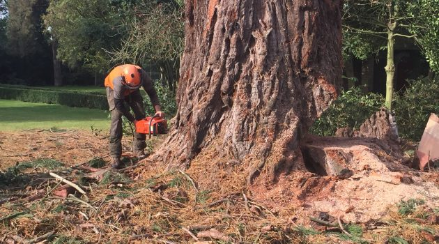 4 Amazing Benefits of Tree Surgery