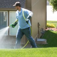 proper identification and removal of the pests