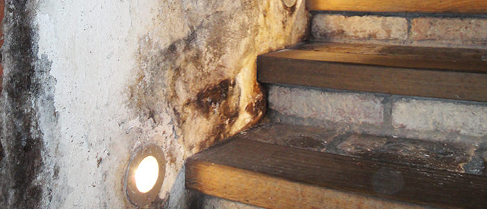 All You Need To Know About Mold And Moisture Problems At Home