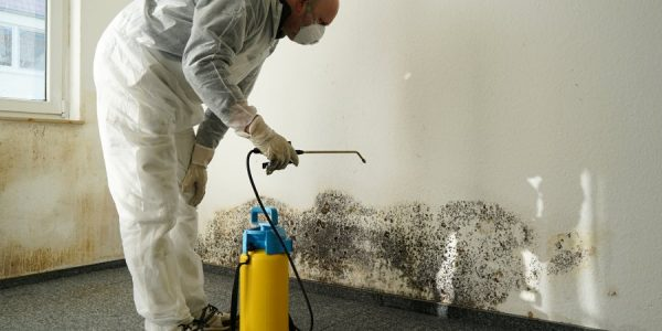 Different ways to prevent mold easily at home