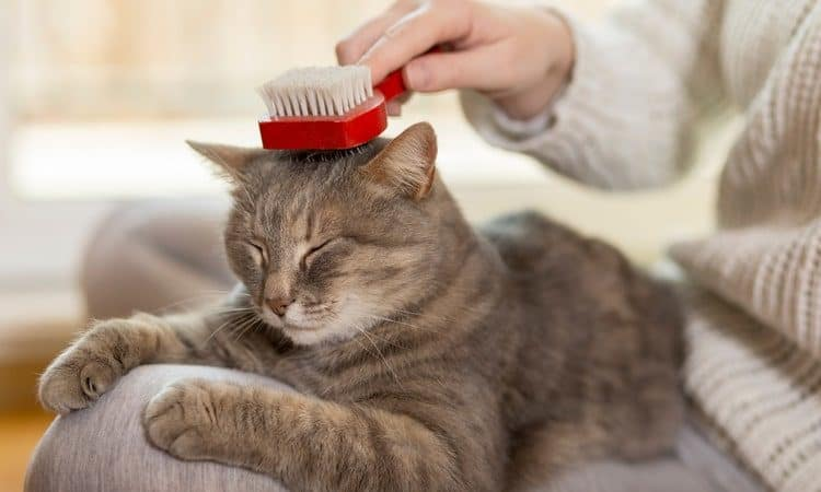 Removing Pet Hair