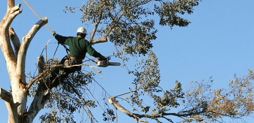local tree removal companies