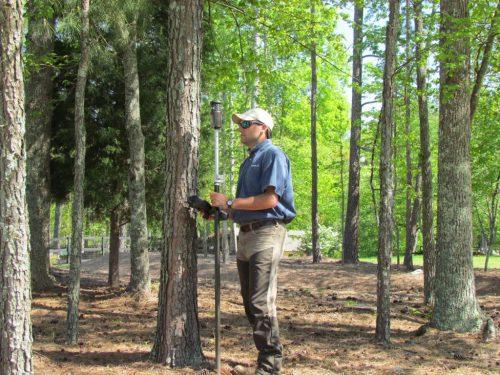 tree survey