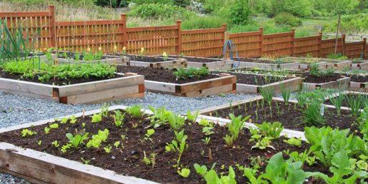 home grown garden